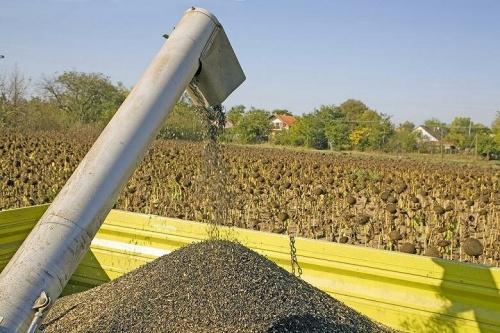В январе из России не продано за границу ни тонны подсолнечника